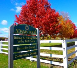 adams-farm-north-street-walpole